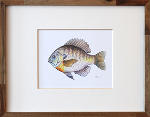 Bluegill Framed