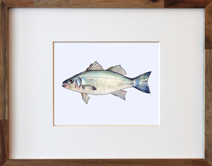 Chilean Sea BAss Framed