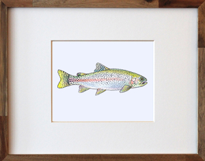 Rainbow Trout framed