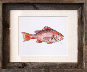Red Snapper Framed