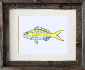 Yellowtail Snapper Framed