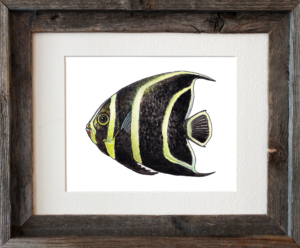 Angelfish Framed