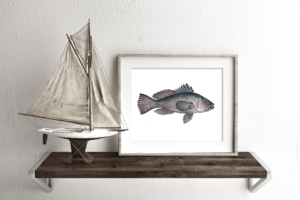 Black Sea Bass II Framed II