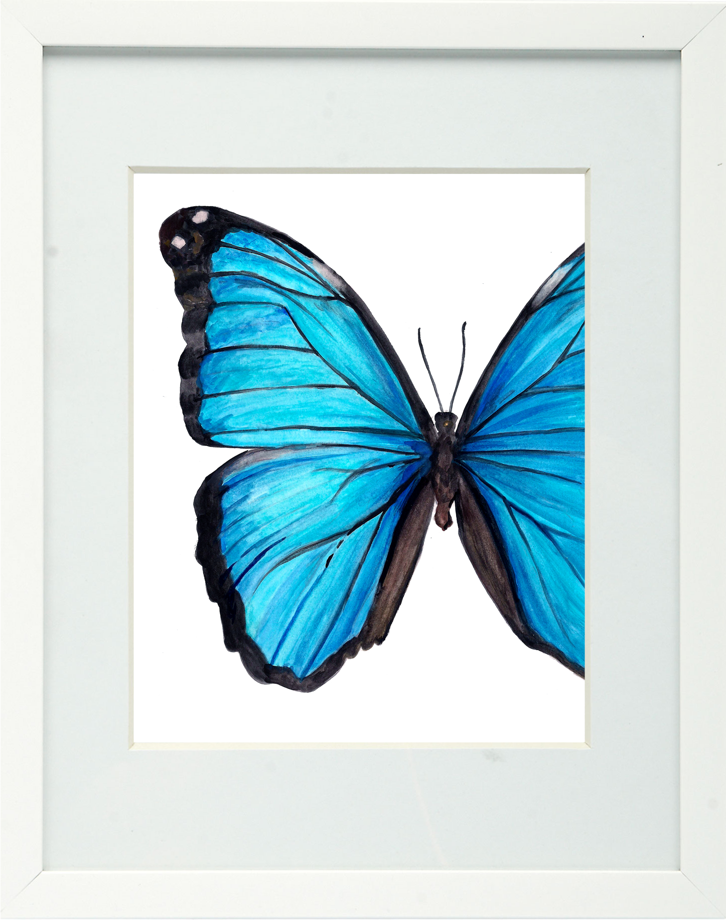 Attractive Blue Morpho Butterfly Framed