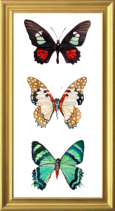 Butterfly Trio Framed