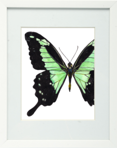 Green Banded Swallowtail Framed