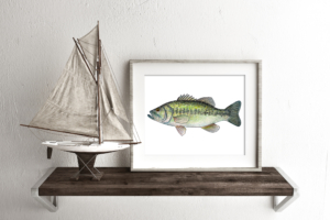 Largemouth Bass Framed
