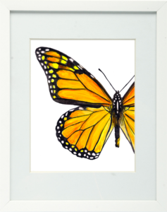 Monarch Butterfly Framed