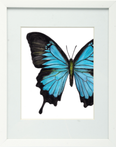 Papilio Ulysses Blue Swallowtail Framed