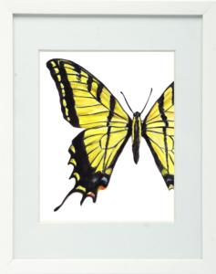 Yellow Tiger Swallowtail Framed