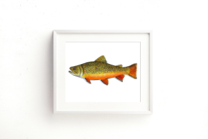 Brook Trout Framed 1