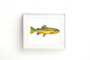 Golden Trout Framed I