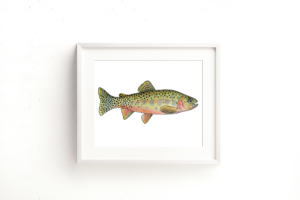 Westslope Cutthroat Trout Framed I